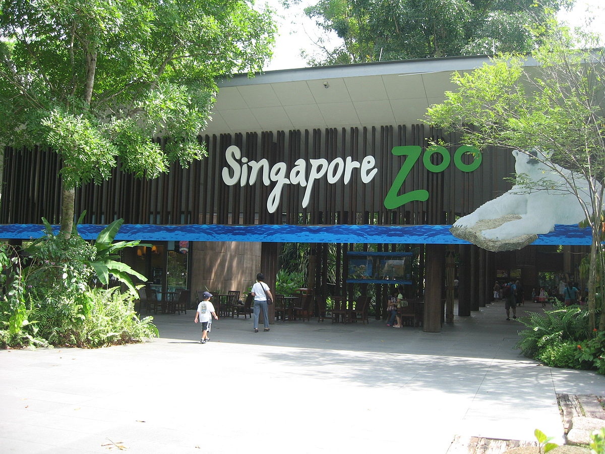 Permalink to Car Zoo