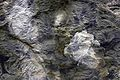 Slate Detail Showing Textured Surface. RHS Wisley Surrey UK.jpg