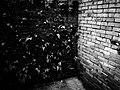 Snapshot, Jungli, Taoyuan, Taiwan, 馬祖新村, 中壢馬祖新村, 隨拍, 中壢, 桃園, 台灣 (14915634919).jpg