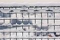 Snow (33144104448).jpg