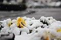 Snow in Matsudo, Chiba, Japan; February 2012.jpg