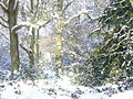 Snow in The Roughs - geograph.org.uk - 1146409.jpg