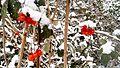 Snow red beans.jpg