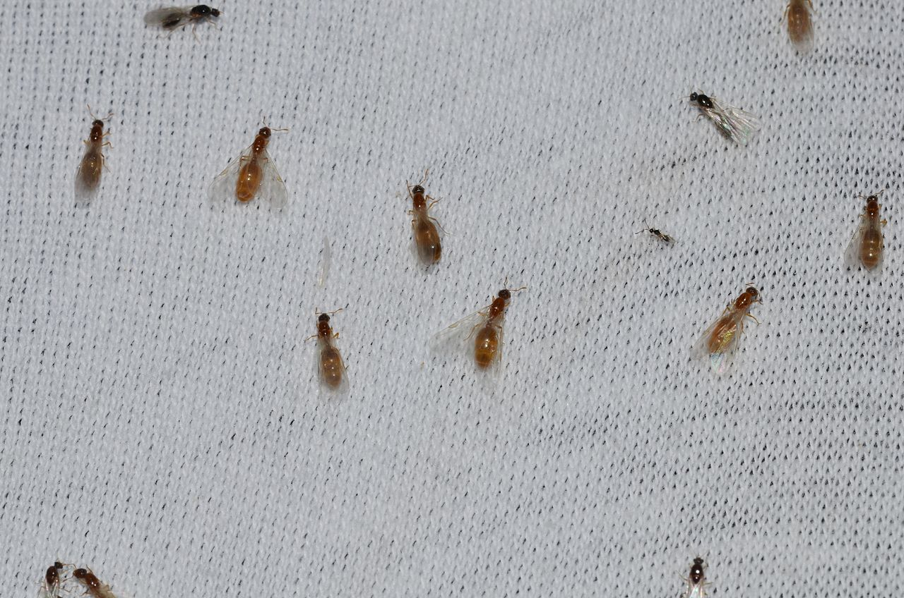 Bed Bug Iowa City
