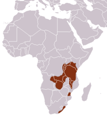 Southern Tree Hyrax area.png