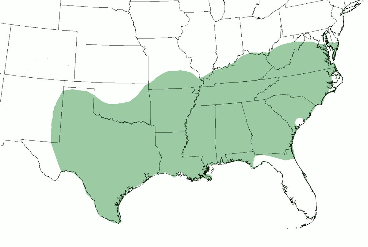 southern american english wikipedia