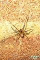 Spider (FG) (6301865626).jpg