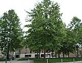 Square du Souvenir de la Rafle du 4 janvier 1944 (Amiens) 02.jpg