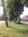 Stadensen Lindenallee.tif