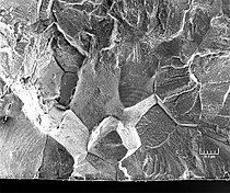 Stainless-steel-304-austenite-fracture.jpeg