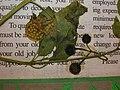 Starr-050427-0884-Solanum americanum-voucher 050418 46-Kapapa-Oahu (24459640650).jpg