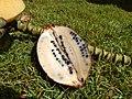 Starr-140925-1947-Musa balbisiana-fruit showing seeds-Pali o Waipio Huelo-Maui (24878823959).jpg