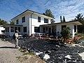 Starr-150325-0518-Polyscias guilfoylei-lead abatement prep around house and Kim-Residences Sand Island-Midway Atoll (25265902585).jpg