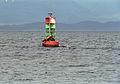 Steller Sea Lion01(js).jpg