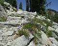 Steps cut into the granite on the PCT - panoramio.jpg