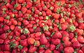 Strawberries in Flensburg.JPG
