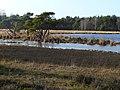 Strijbeekse Heide File104.jpg