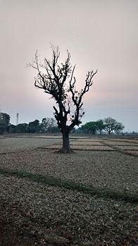 Sukinda lonely Tree.jpg