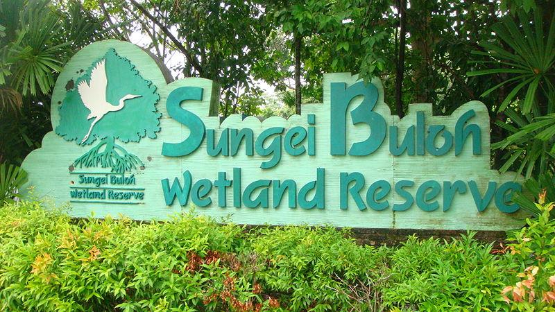 Sungei Buloh Wetland Reserve in Singapore