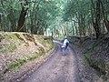 Sunken Lane approaching Acres Down House - geograph.org.uk - 34684.jpg