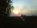 Sunset in the Egyptian countryside.jpg
