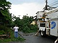 Surveying fallen trees and power lines.jpg