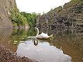 Swan on Prokop lake 2.jpg