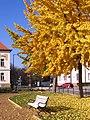 Szentes 2014-11-15, Erzsébet tér, Napfényes pihenőhely. - panoramio.jpg