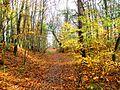 Szlak z wzgórza Zielonka do jez. Turkusowego - panoramio.jpg