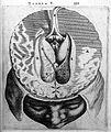 T. Bartholin, glandula pinealis et tertius.. Wellcome L0007848.jpg
