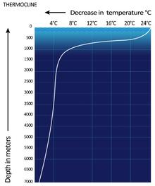 Thermocline - WikipediaWikipedia
