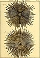 Tableau encyclopédique et méthodique des trois règnes de la nature (1791) (14581554979).jpg