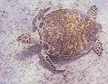 Tamarindo Beach 2-8 (24812625521).jpg