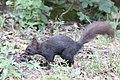 Tarnow Park Strzelecki wiewiorka 5.jpg