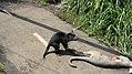 Taronga Zoo, Sydney (483446) (9443109084).jpg