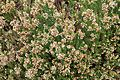 Tatton Park 2015 24 - Heather Erica Abla Minor.jpg