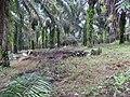 Tayap-Végétation (2).jpg
