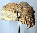 Testa maschile con capigliatura a treccia, forse apollo, 27 ac-14 dc ca., dalla domus tiberiana.jpg