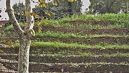 Testaccio monte dei cocci a via Galvani 051204-02.JPG