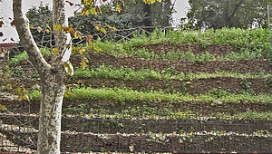 Monte Testaccio - Terraces on Monte Testaccio