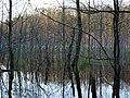 Teufelsbruch swamp next to crossing path in spring 6.jpg