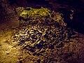 Teufelshöhle bear bones 17RM1090-PSD.jpg