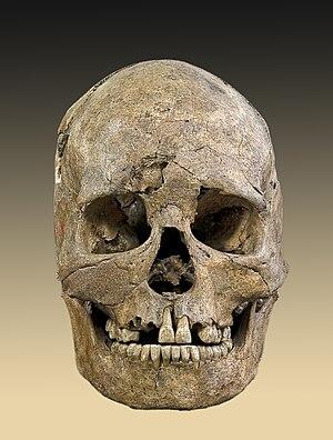 Mesolítico: Cráneo de Teviec