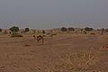 Thar Desert 04.jpg