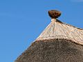 Thatched roofs z02.JPG