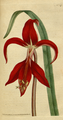The Botanical Magazine, Plate 47 (Volume 2, 1788).png
