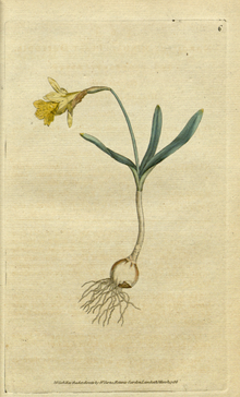 The Botanical Magazine, Plate 6 (Volume 1, 1787).png