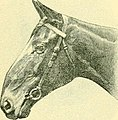 The Horse - its treatment in health and disease, with a complete guide to breeding, training and management (1905) (14763790642).jpg