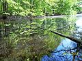 The Lawrence Brook, Monmouth Junction, New Jersey USA May 2013 - panoramio (9).jpg