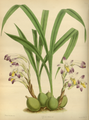 The Orchid Album-02-0012-0051.png